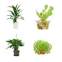 peace lily plant care instructions